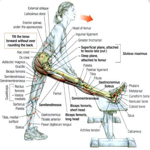 Istezanje mišića zadnje lože - savijanje unapred