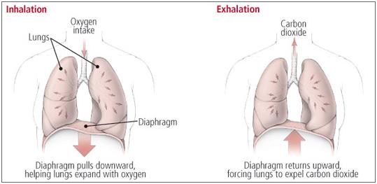 Pravilno disanje kod vezbanja