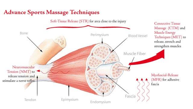 Zagrevanje pre treninga - vlakna misića