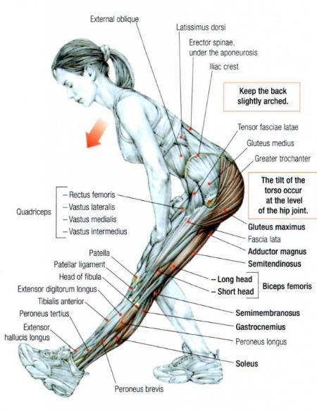 Istezanje mišića zadnje lože - pretklon trupom unapred